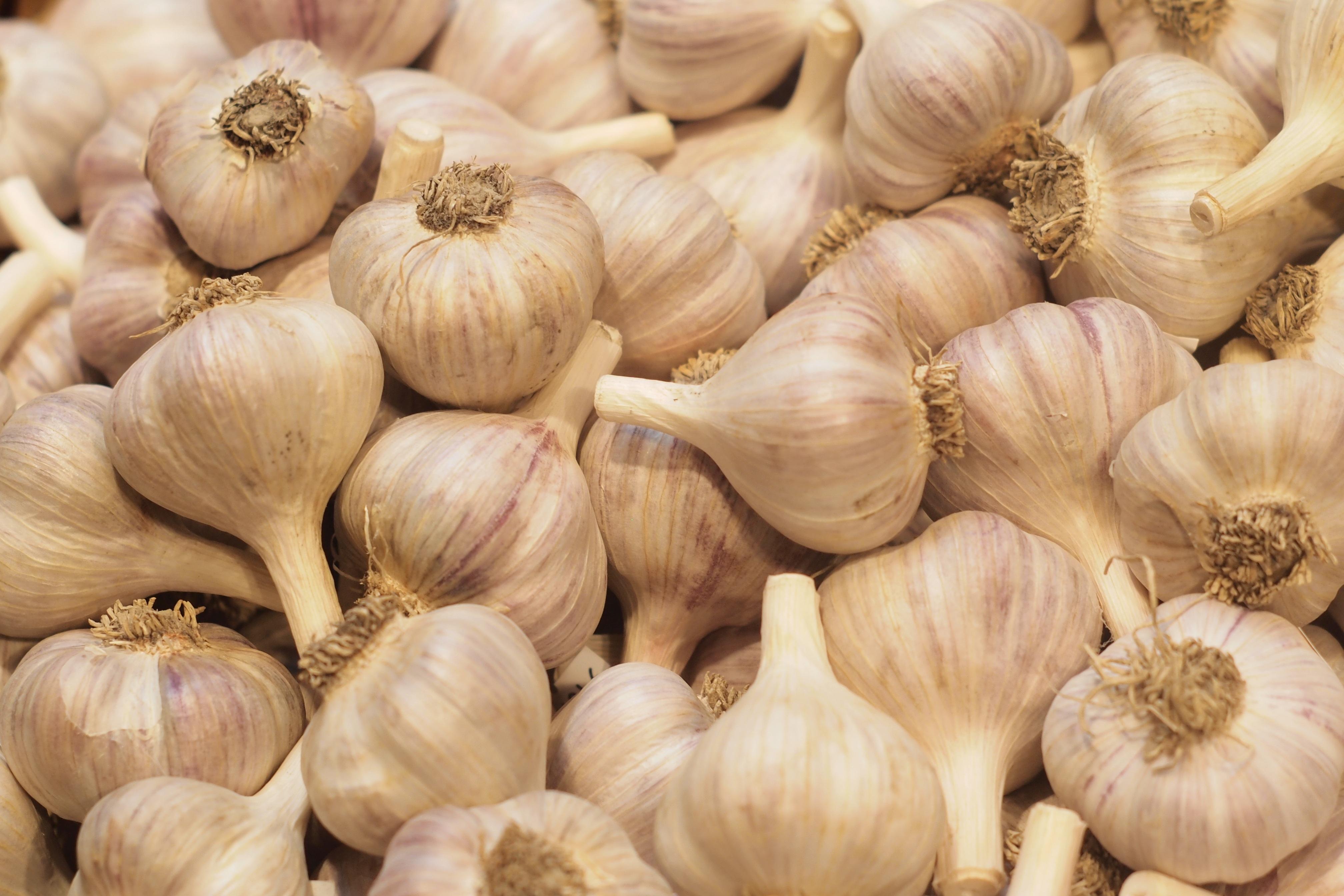 garlic-877968